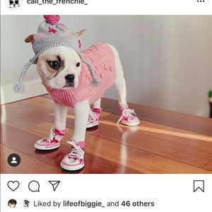 Small sweater for puppy